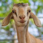 The Productivity Trap – Don't be 'Goat Productive'