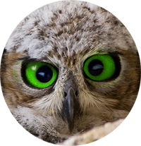 Owl200